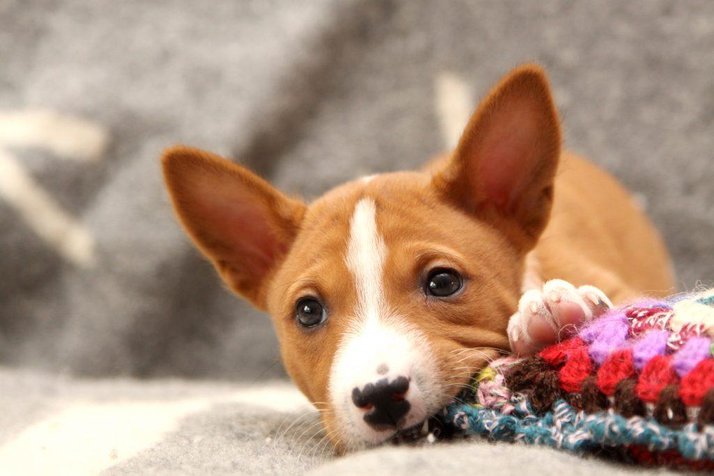 biting-puppy