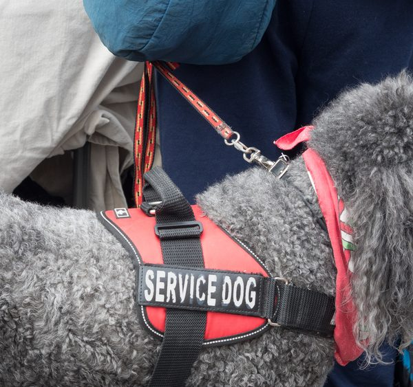 service-dog-training-atlanta