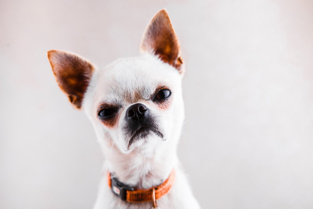 dog-training-roswell-alpharetta-cumming-milton-atlanta