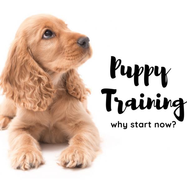 puppy-training-atlanta