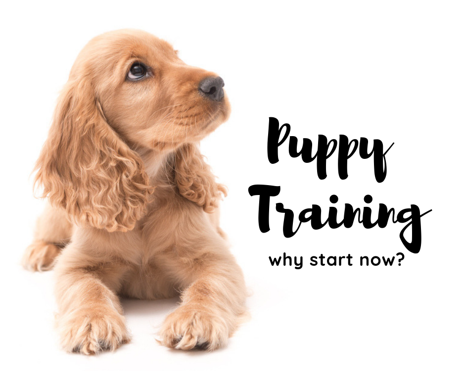puppy-training-atlanta