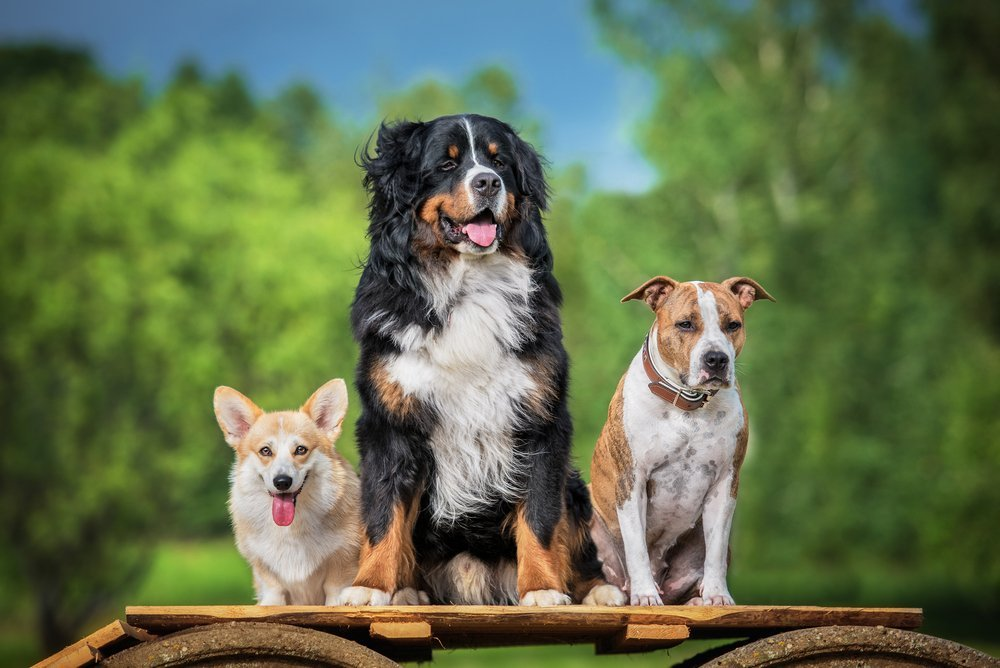 roswell-dog-training