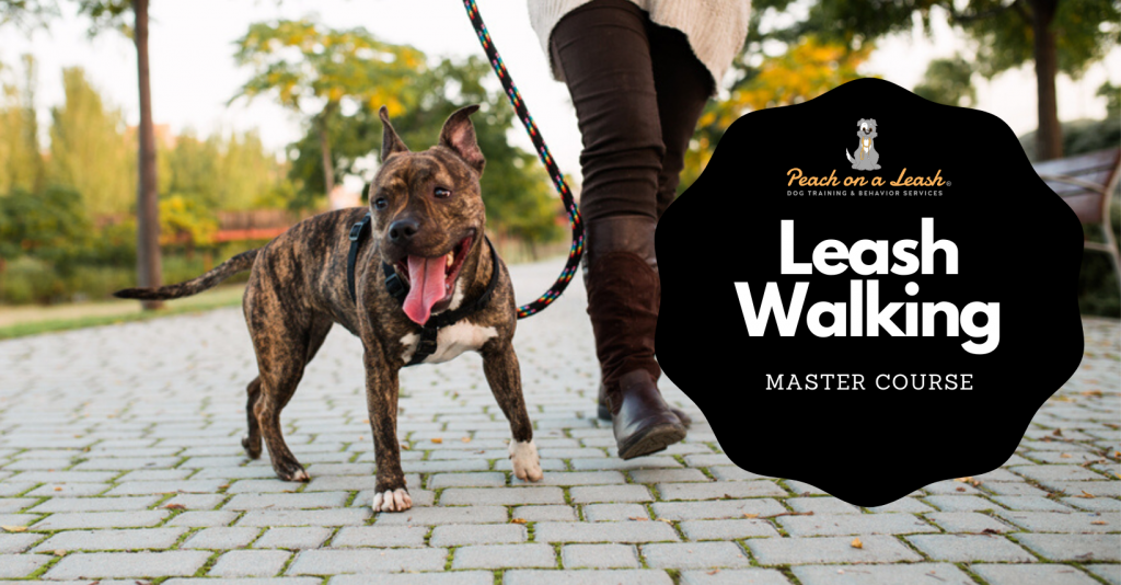 Leash Walking Dog Training