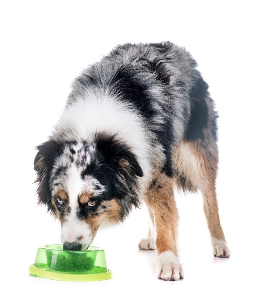 resource guarding dog
