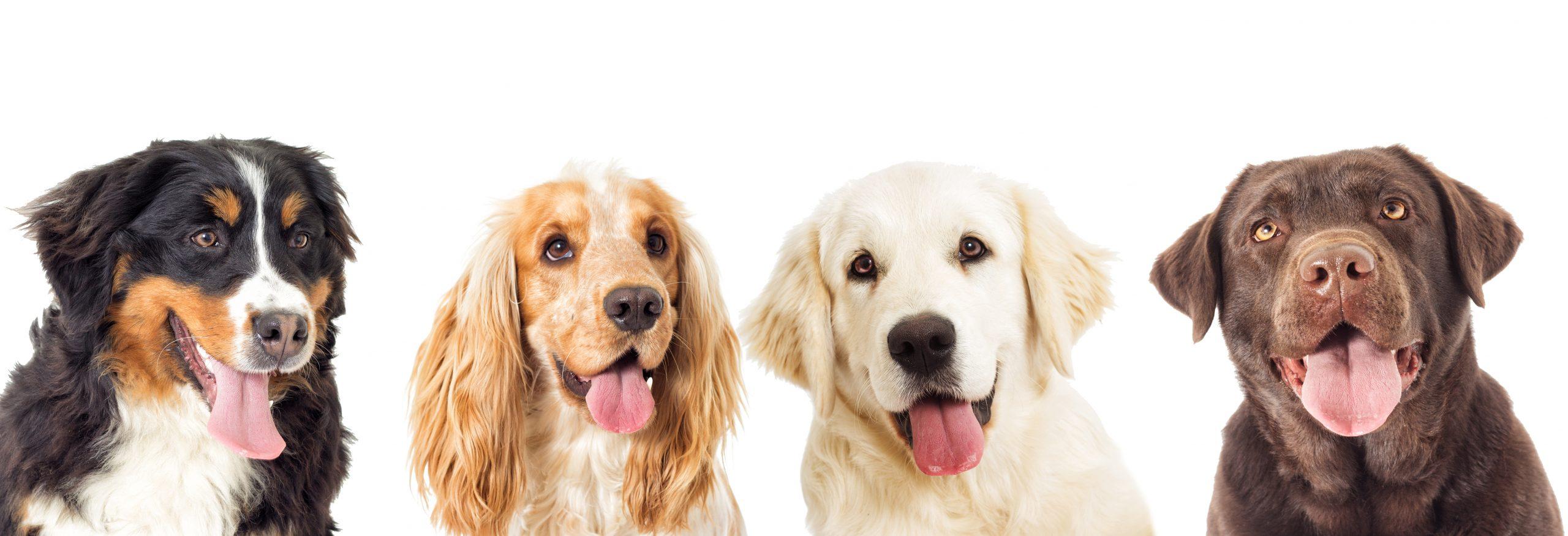 Family Dog Class